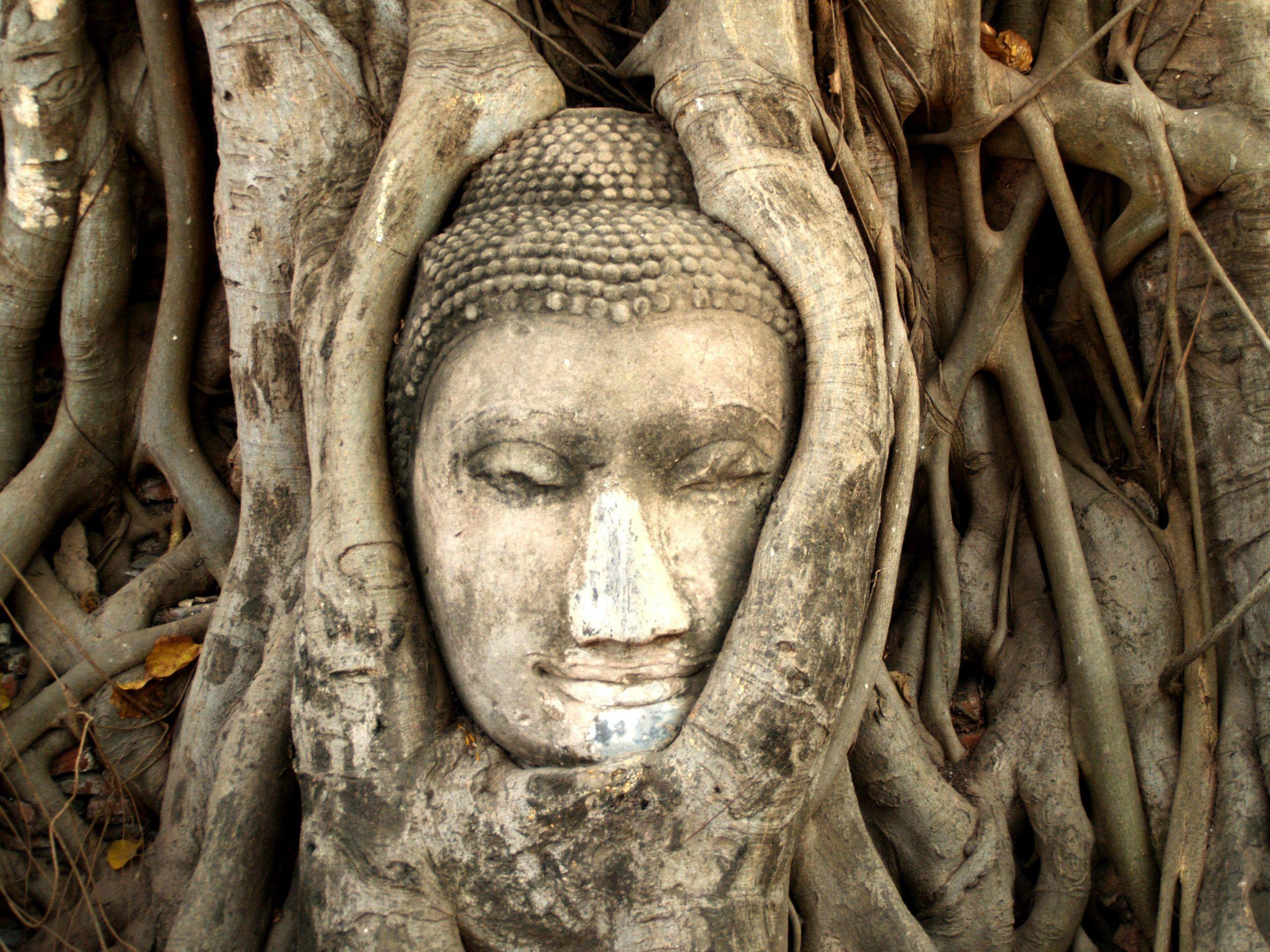 ¿Cuáles son las tres cosas que más importan según Buda?